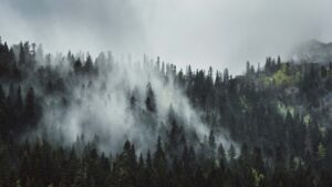 Smoke coming from forest.